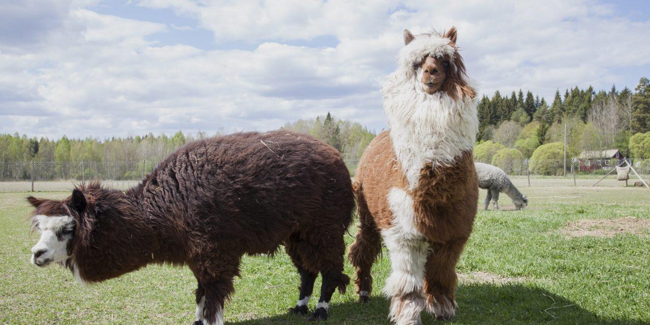 Eläimet voivat toimia mielen hyvinvoinnin tukena – tässä ovat Linde, Kalle, Eemeli ja Nipsu