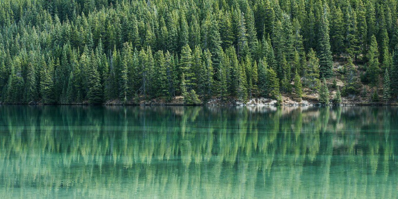 Onko keskittymiskykysi riekaleina? Kokeile elvyttää sitä metsässä